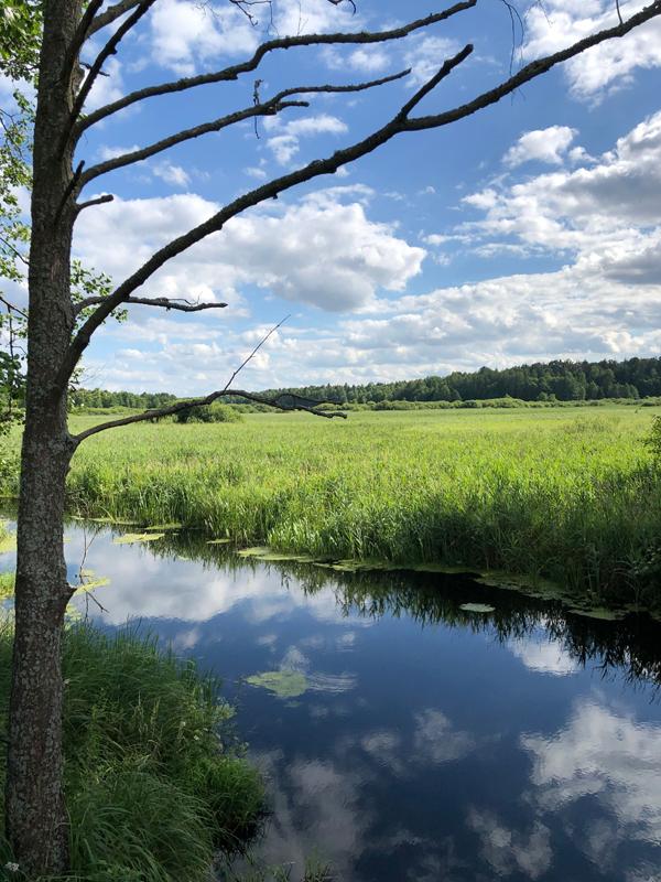 Der unregulierte Narewka-Fluss
